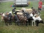 ftbak petting zoo